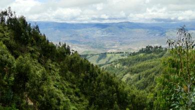 Photo of Bosque de Usqu Willka: Disfruta de la naturaleza en esta ruta de trekking