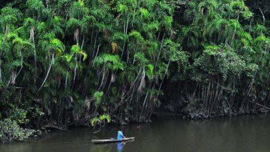 Photo of Parque Nacional Gueppi Sekime: Habitad natural de especies selváticas