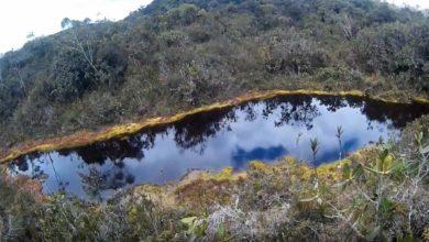 Photo of Bosque Sho'llet – Disfruta mientras recorres este bosque y sus lagunas