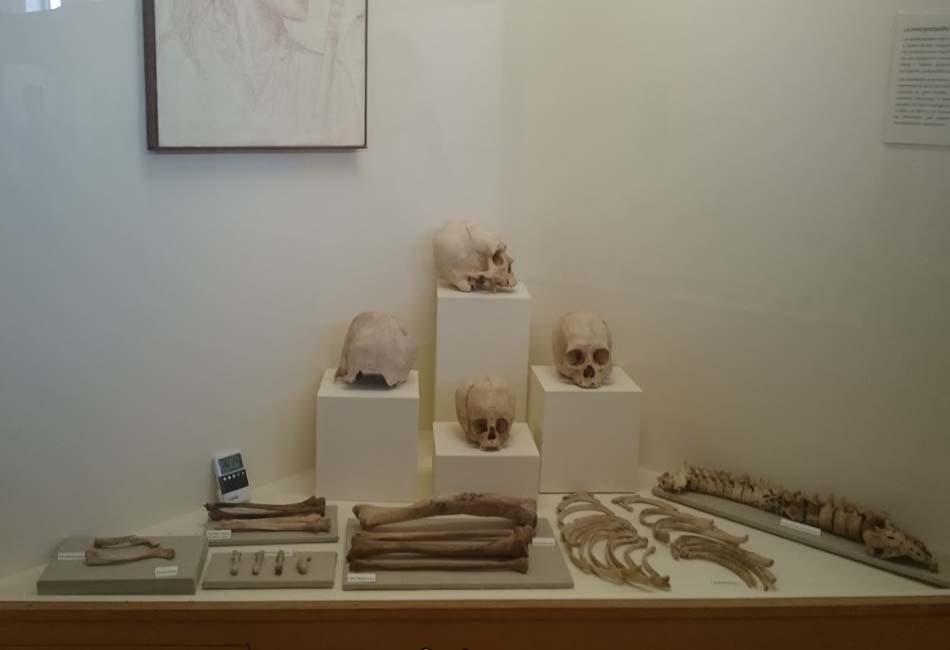 Photo of Museo Contisuyo: Conoce la historia de la cuidad en este histórico lugar