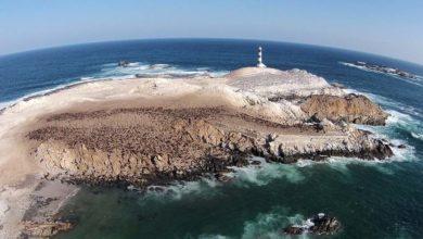 Photo of Punta Coles: Una biodiversidad costera que se debe preservar y visitar
