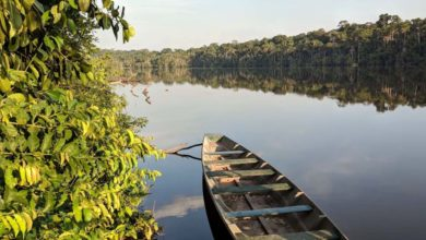 Photo of Reserva Nacional de Tambopata: Deléitate con sus lagos y collpas