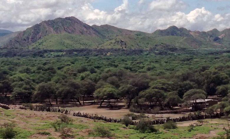 Foto panorámica del Santuario Historico del bosque de pomac Lambayeque