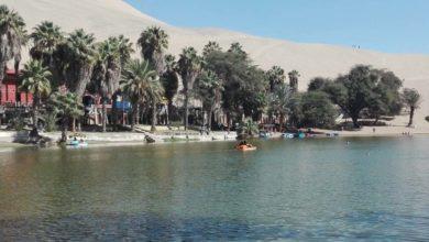 Photo of Paracas: Vive el turismo la aventura en su Reserva, islas y bahía