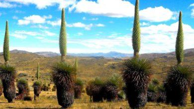 Photo of Reserva Nacional de Calipuy: Visita y disfruta de este ecosistema