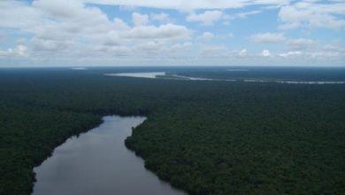 Photo of Reserva nacional Pacaya Samiria: Enamórate de este Bosque Tropical