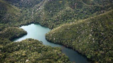 Photo of Parque Nacional Sierra del Divisor: Descubre su vegetación y fauna único
