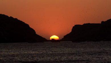 Photo of Isla Foca: Disfruta de esta maravilla natural y sus especies maritimas