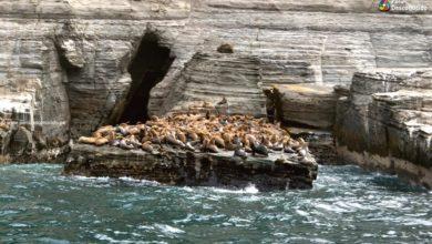 Photo of Loberas de Huarmey: Lobos de mar y una aventura sin igual