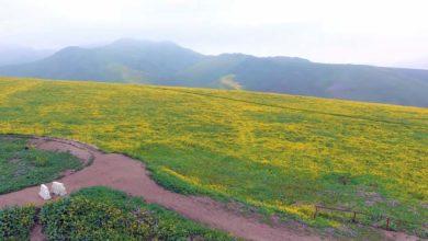 Photo of Lomas de Lachay – Reserva Nacional para disfrutar de la naturaleza